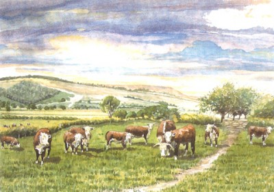 Barbara Graham Art - Herefords