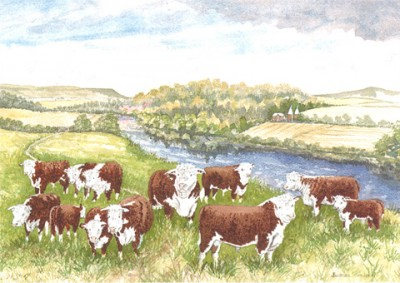 Barbara Graham Art - Herefords by the river